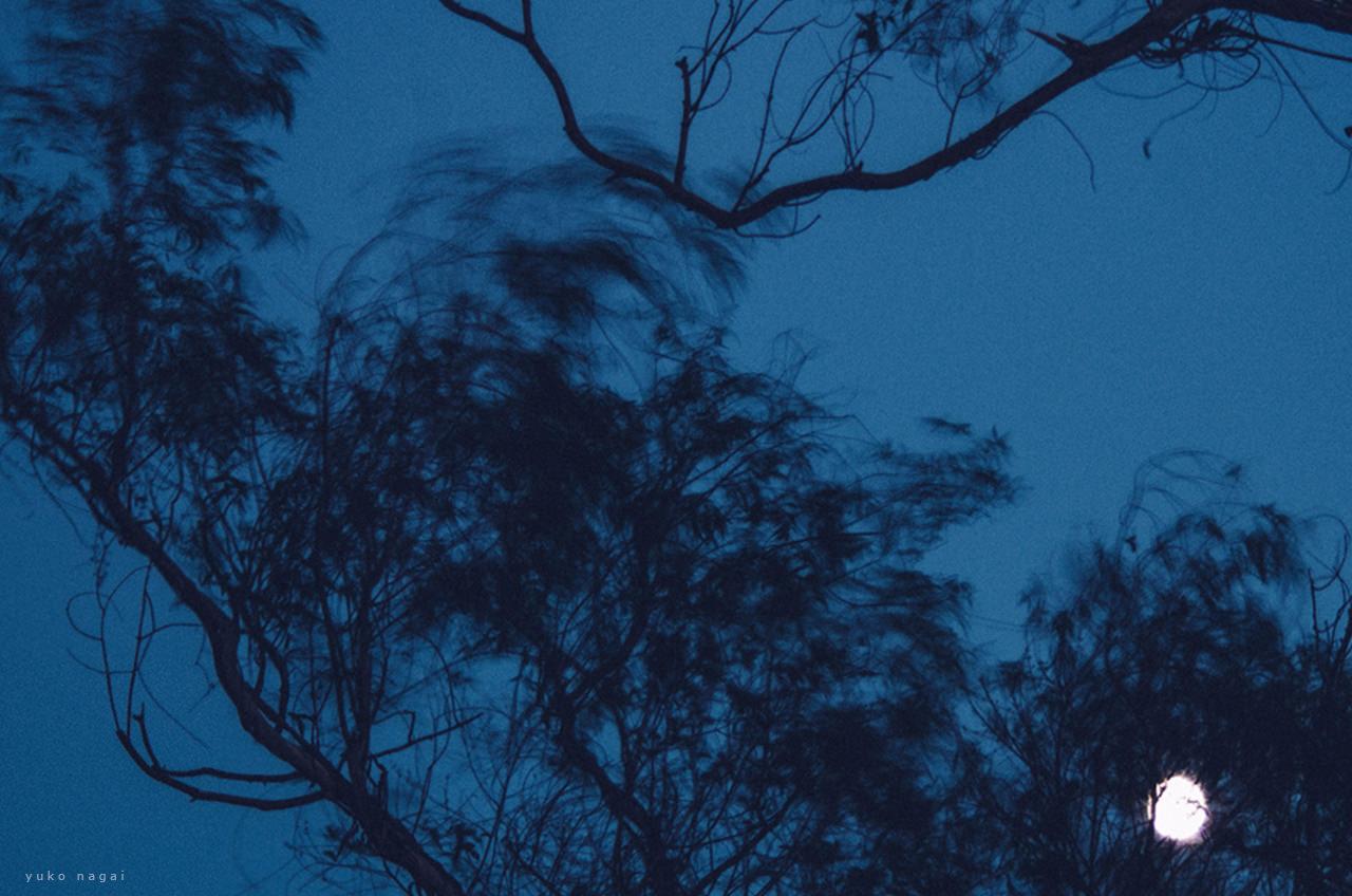 Moon behind a tree.