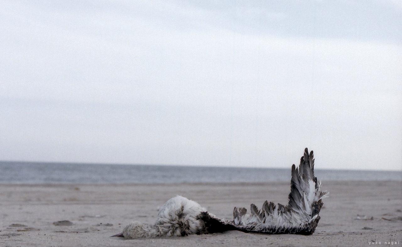 Dead gull on the beach.