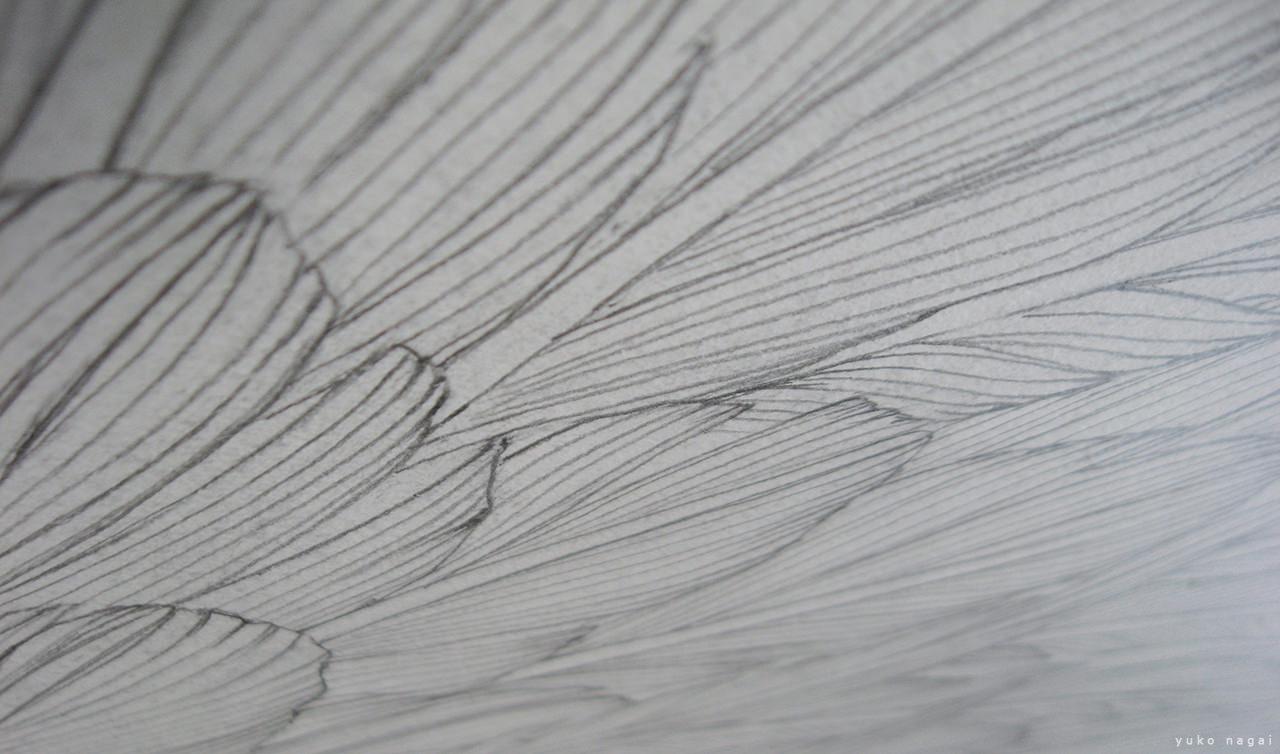 Wing pencil drawing.