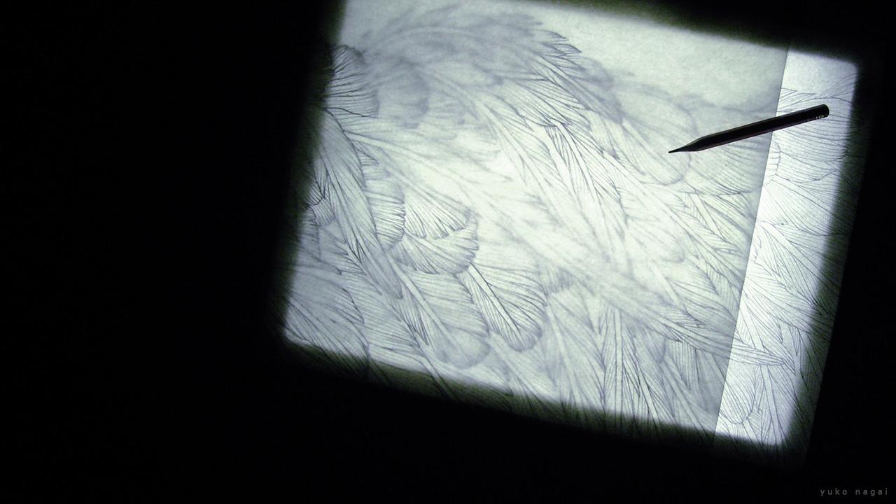 Tracing wing drawing.