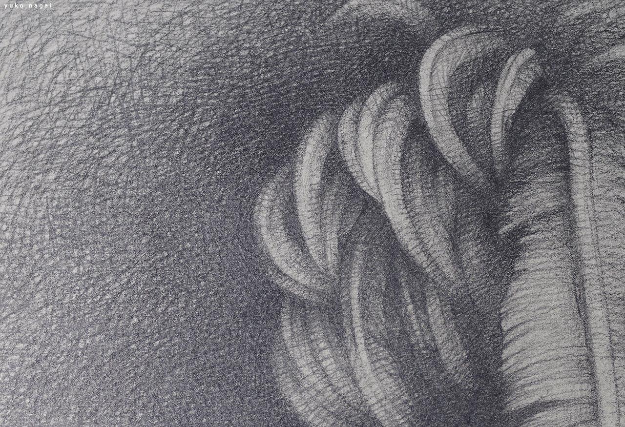 A pencil drawing of a wing.