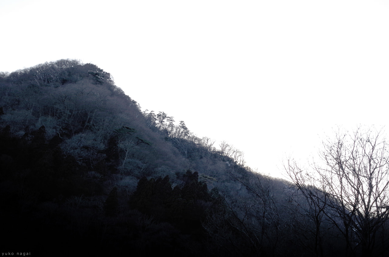 Winter mountain with dry branches.