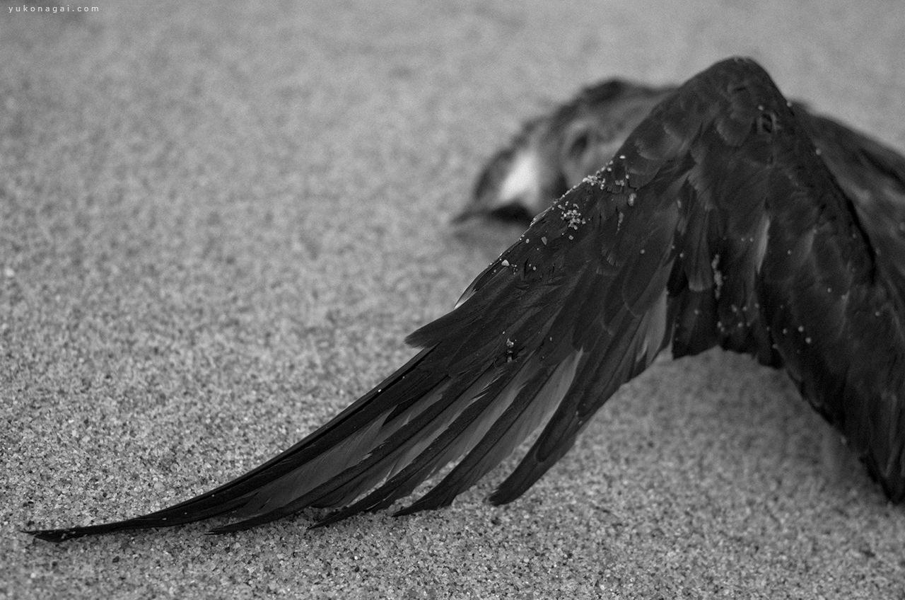 A dead bird on the sand.