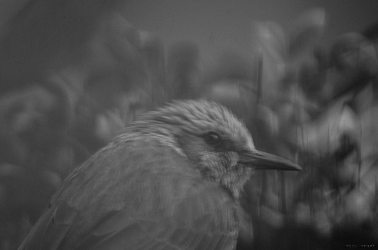 A small bird.